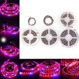 0.5M / 1M / 2M / 3M / 4M / 5M 5050SMD Rosso impermeabile: blu 3: 1 spettro completo crescente LED Strip light DC12V