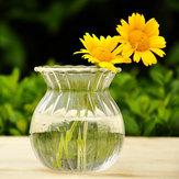 Гидропоники растения полоса форма стеклянной бутылки вазы дома сад украшение свадьба