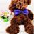 Multicolor Pet Dogs Bow Tie Dog Neck Tie Cat Tie Pet Grooming Supplies