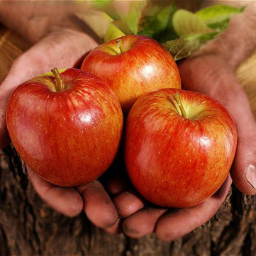 Egrow 100 Pcs/Pack Apple Tree Seeds Garden and Home Potted Fruit Red Apple Seed Bonsai Plants